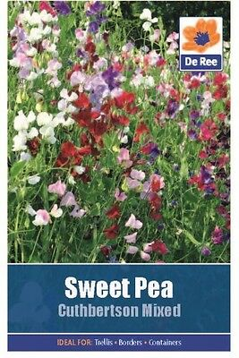 2 Packs of Sweet Pea Cuthbertson Mixed Flower Seeds, Approx 8 seeds per pack