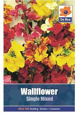 2 Packs of Wallflower Single Mixed Flower Seeds, Approx 400 seeds per pack