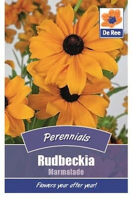 2 Packs of Rudbeckia Marmalade Flower Seeds, Approx 365 seeds per pack