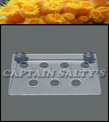 Captain Saltys Coral Reef Magnetic Invisible Frag Rack (Small) CS20001