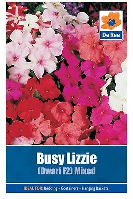2 Packs of Busy Lizzie Dwarf F2 Mixed Flower Seeds, Approx 114 seeds per pack