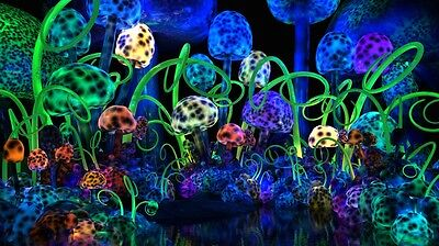 "Magic mushroom art Silk Cloth Poster 24 x13"" Decor 03"