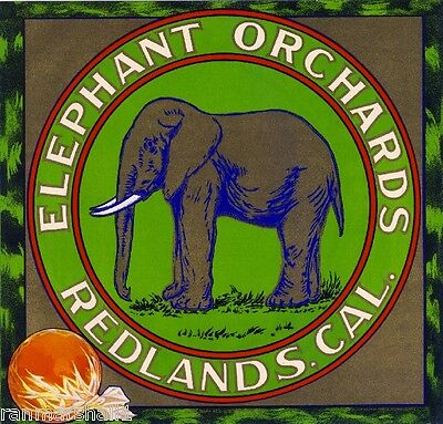Redlands Elephant Orchards Orange Citrus Fruit Crate Label Art  Print
