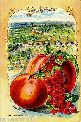 Peach & Red Currants Vintage Fruits Seed Packet Catalogue Advertisement Poster