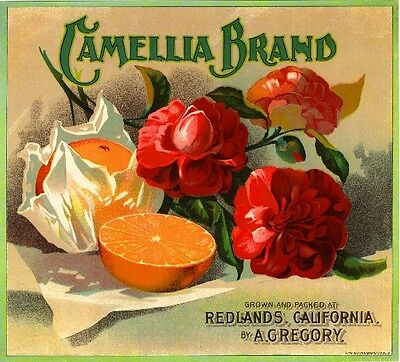 Redlands Camellia Version #5 Orange Citrus Fruit Crate Label Art Print