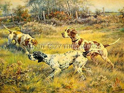 Antique Bird Hunting 8X10 Osthaus Photograph Print   3 English Pointers On Point