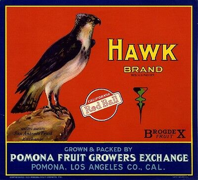 Pomona Hawk Bird Orange Citrus Fruit Crate Label Art Print