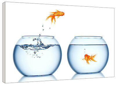 Jumping Goldfish Canvas Wall Art Picture Print