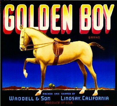 Lindsay Tulare County Golden Boy Horse Orange Citrus Fruit Crate Label Art Print