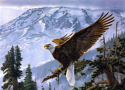 Modern Home Decor HD Prints oil painting art on canvas 16x20inch Eagle NTD033