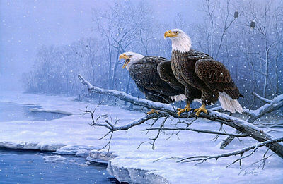 Modern Home Decor HD Prints oil painting on canvas 16x24inch Snow Eagle NTD042
