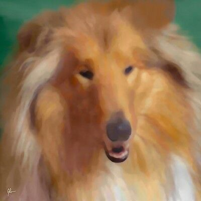 Scottish Collie Dog, Brown, GEP Signed 12 x 12 Art Print / Painting / Watercolor