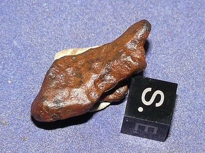NEW IRON AGOUDAL IMILCHIL METEORITE FROM MOROCCO 15,6 g