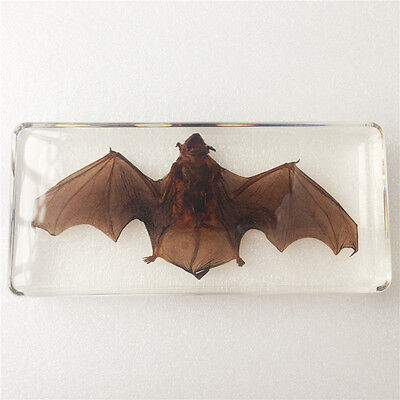 Greater Bamboo Bat Animal Resin Specimen In Clear Lucite Paperweight
