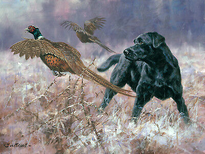 Pheasants and Black Lab Christmas cards pack of 10 by John Trickett. C477X