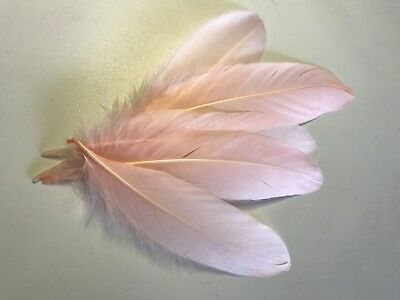 Pack of 5 x 13-20cm Long Lightest PINK Goose feathers for craft/millinery