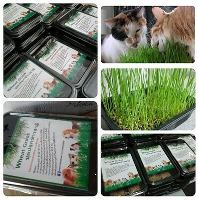 Organic Pet grass Kit(Dog Cat Rabbit etc.):1 Box set has:Soil 1 bag Seed 2 bags