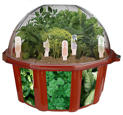 Culinary Herb Garden - Grow Your Own Herbs at Home - NEW