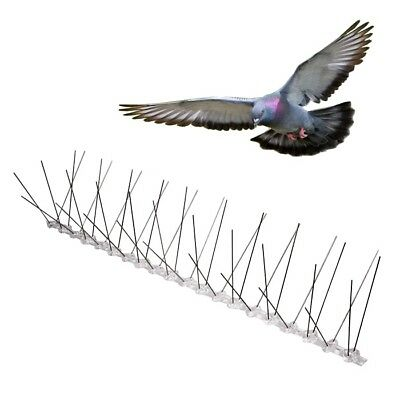 ANTI BIRD SPIKES * 1 METRE * Stainless Steel Polycarbonate Base Pigeon Deterrent