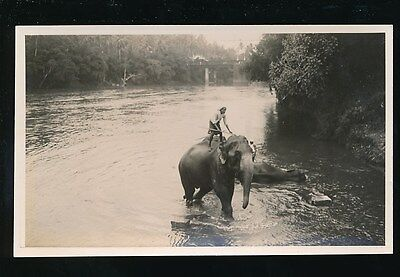 Ceylon Kandy ELEPHANTS river bathing 1933 photograph