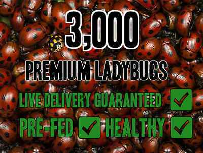 3000 Premium Live Ladybugs Natural pest control Beneficial Insects!