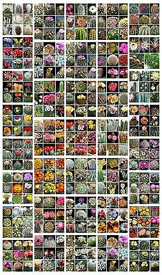 150 seeds of  cacti mix, succulents seed   C