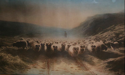 Antique/Vintage late 19th century to early 20th century art print of sheep WOW!