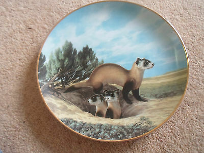 Cute Plate The Black-Footed Ferret By Will Nelson Last of Their Kind Endangered