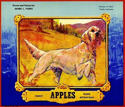 Visalia White Astrachan English Setter Dog Apple Fruit Crate Label Art Print