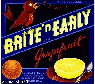 Canoga Park Brite N' Early Song Bird Grapefruit Citrus Fruit Crate Label Print