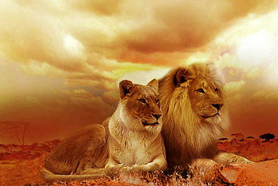 Modern Home Decor HD Prints oil painting art on canvas 16x24inch Lion NTD101