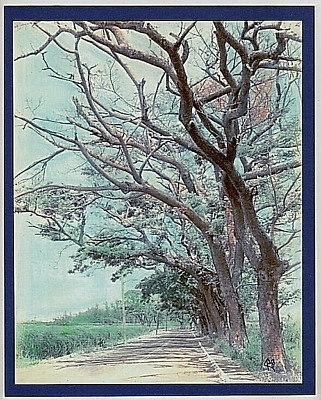 Paalaa Road Haleiwa Scenic Giclee F/hand Colored B&w Photo On 8X10 Inch Matt