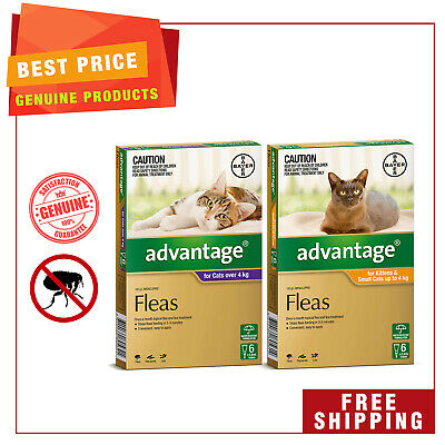 ADVANTAGE for Cats 6 Pipettes + EXTRA 2 Pipettes Best Flea treatment for Cats