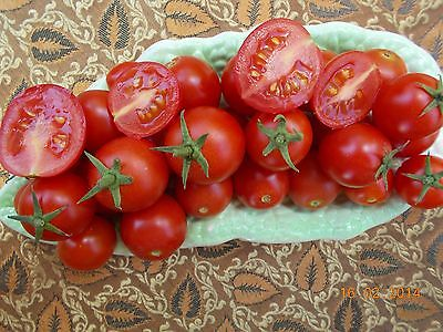 Tomato – Sweet Red Cherry Truss (solanum lycopersicum) 20 Reliable Viable Seeds