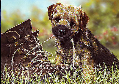 Border Terrier Dog, Christmas cards pack of 10 by Paul Doyle. C80X