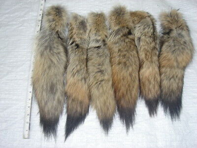 #1 Quality XL Tanned Western Coyote Tails/Fur/Crafts/Real Fur Tails/Harley parts