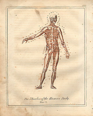 1810 Print Culpepers Physician & Herbal ~ Male Anatomy Muscles Of The Human Body