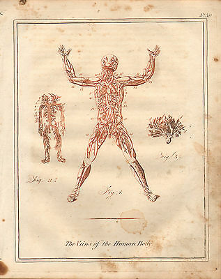 1810 Print Culpepers Physician & Herbal ~ Anatomy Veins Of The Human Male Body