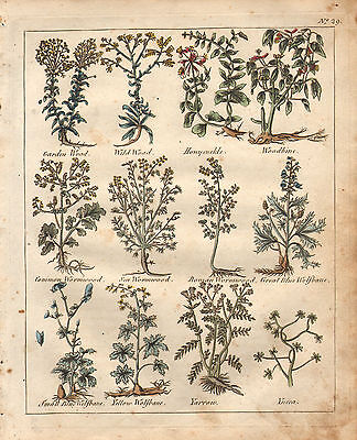 1810 Print Culpepers Herbal No. 29 Botanical Hand Coloured Medicine Herbs