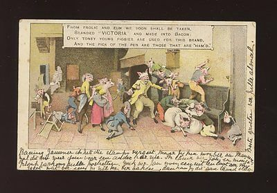 Animals PIGS comic Victoria brand bacon & ham advert used  c1902? S Africa PPC