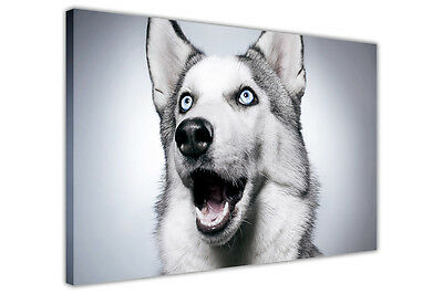 Funny Husky On Canvas Wall Art Prints Animal Posters Dog Pictures Home Deco