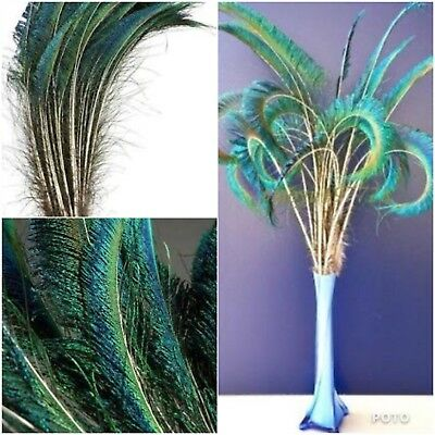 5 x 50-65cm Natural Sword Peacock Feathers DIY Craft Millinery Vase Home Decor