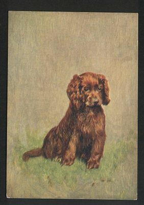 Sussex Spaniel Tobacco card postcard dogs 1930's #067