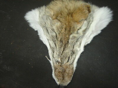 Tanned Coyote Faces #2quality/Crafts/Real Coyote fur/Great for costume designers