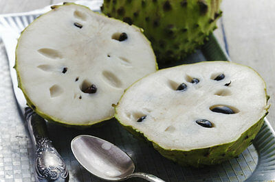 Annona cherimoya, Custard Apple 10 Seeds