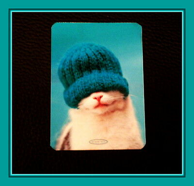 Brrrr It's Cold Outside - Cute Kitten With Stocking Cap Refrigerator Magnet
