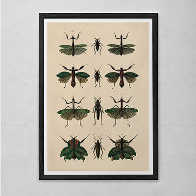 VINTAGE NATURE PRINT- Antique Nature Print - Antique Insect and Butterfly Art An