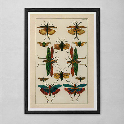 VINTAGE NATURE PRINT- Antique Nature Print - Antique Moth and Butterfly Art Anti