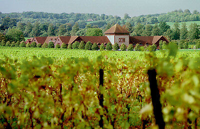 Vineyard Wine Tasting Tour for Two with Lunch - Valid min. 9 months from issue