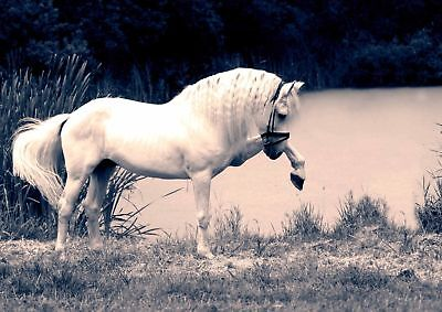 BEAUTIFUL HORSE PHOTO FILTER STYLE POSTER PICTURE PRINT Sizes A5 to A0 **NEW**